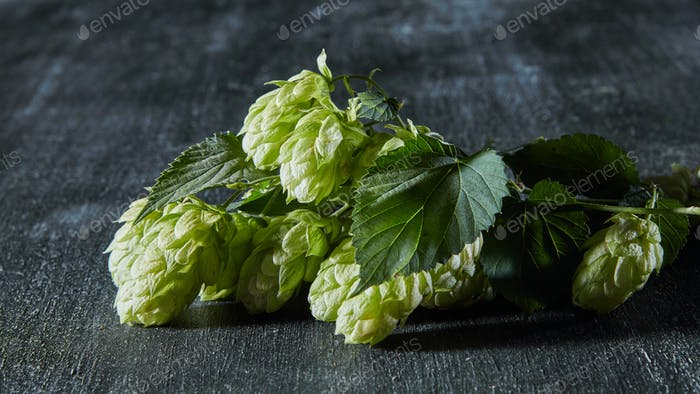 Fresh green hop branch on wooden background.