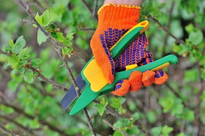 Hands in gloves of gardener doing maintenance work, cutting the