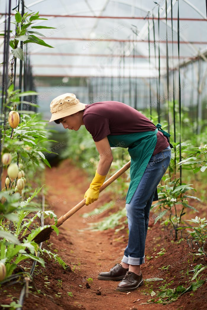 Digging greenhouse worker