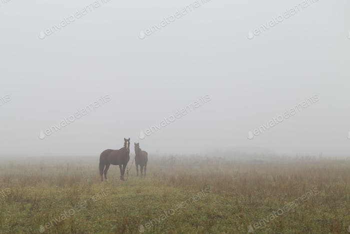 Horses in a paddock on a cold foggy morning