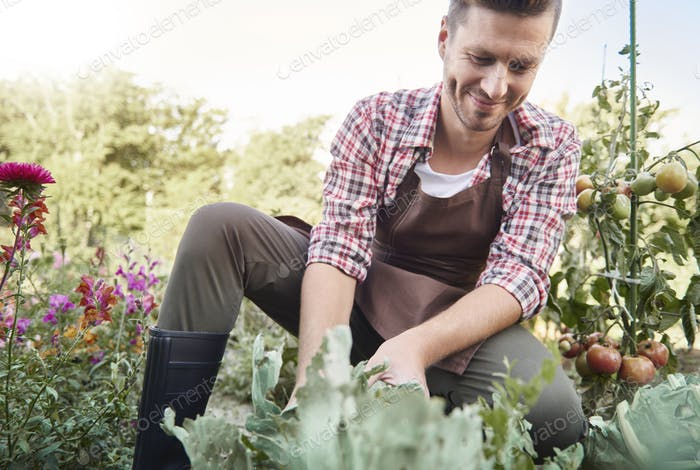 Picture of confident farmer in sunny garden