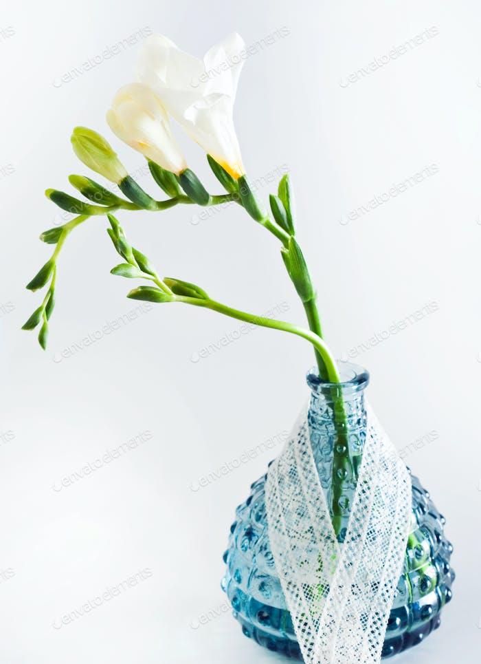 Weiße Freesie Blumen in dekorativen Flaschen