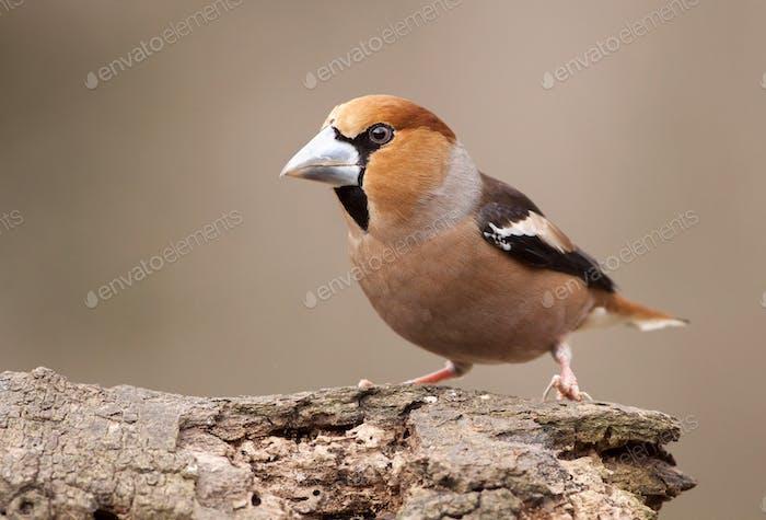 Bird sitting on a branch in spring