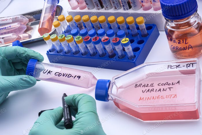 Scientist writes in a vial new variant of covid-19 virus from Brazil detected in Minnesota