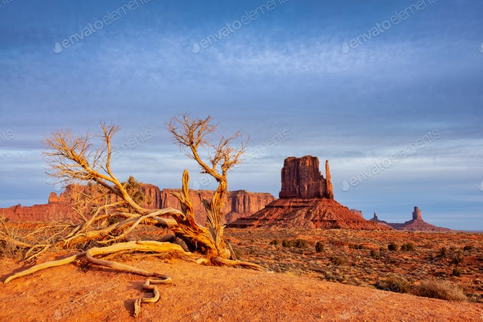 Monument valley landscape view with dry tree and dramatic sky, Arizona