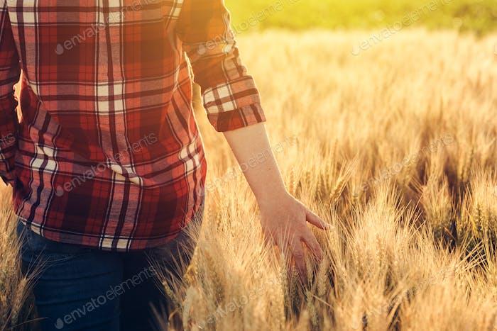 Weibliche Bauer in kariertes Hemd berühren Weizenernte Ohren