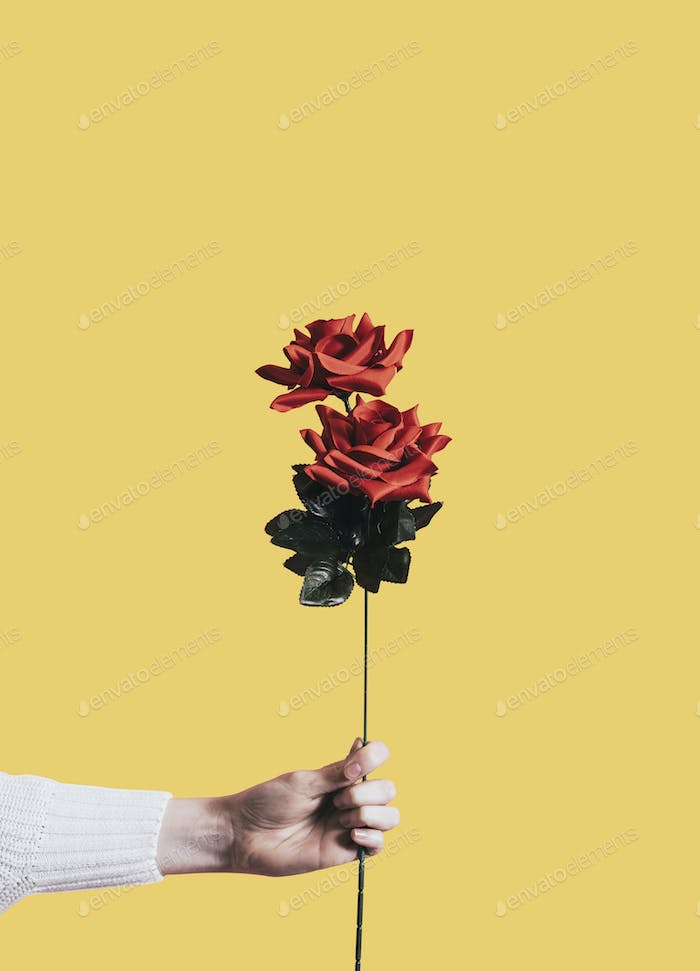Giving a rose for Valentines day