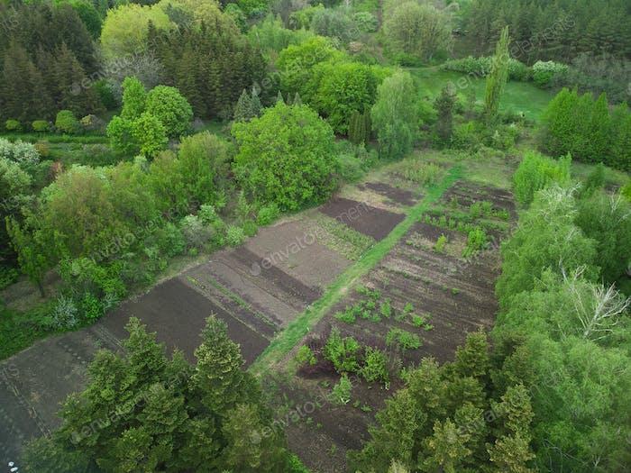 Green vegetable garden, Europe Ukraine, top view