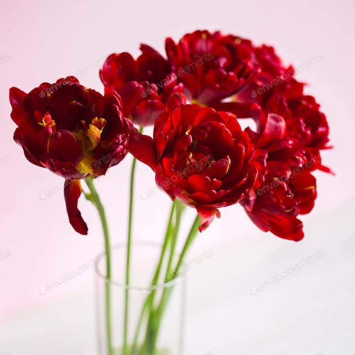 Beautiful bouquet of tulips on a white background