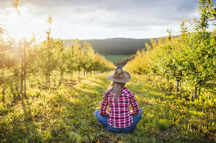 A rear view of female farmer sitting outdoors in orchard. Copy space
