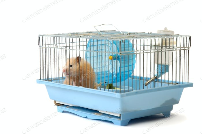 House mouse in cell on the white background