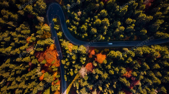 Curwy Winding Road Trough Forest at Fall Foliage Colors. Top Dow