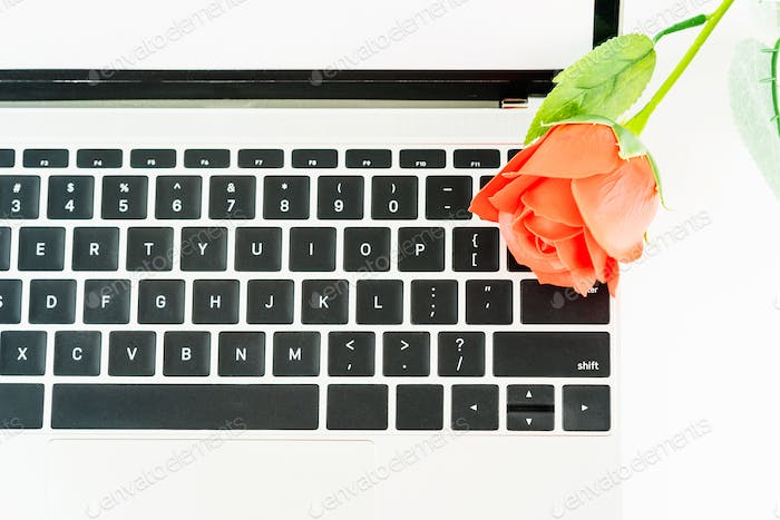 Red rose on laptop on white_-6