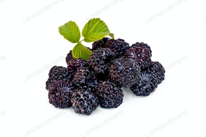 Blackberries with leaf