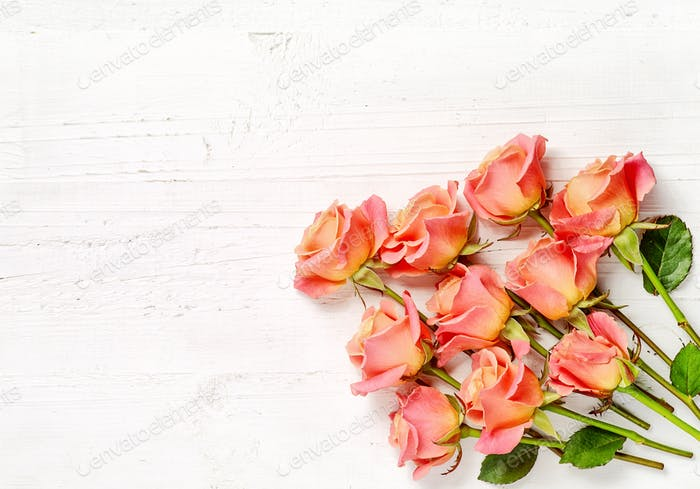pink roses on white wood background