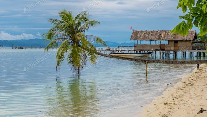 Coconut Palms near Diving Station on Kri Island, Raja Ampat, Indonesia, West Papua