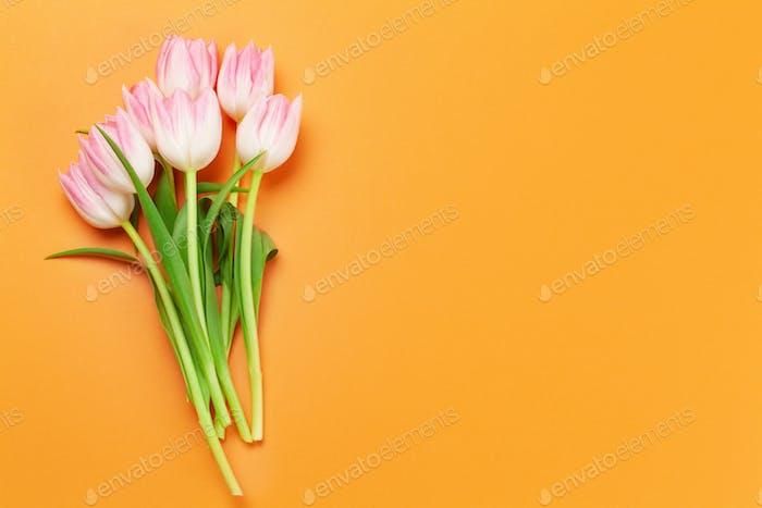 Rosa Tulpen auf orangefarbenem Hintergrund