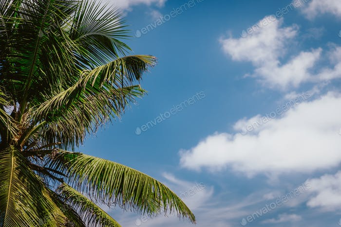 Palm tree leaves against the blue sky and white clouds