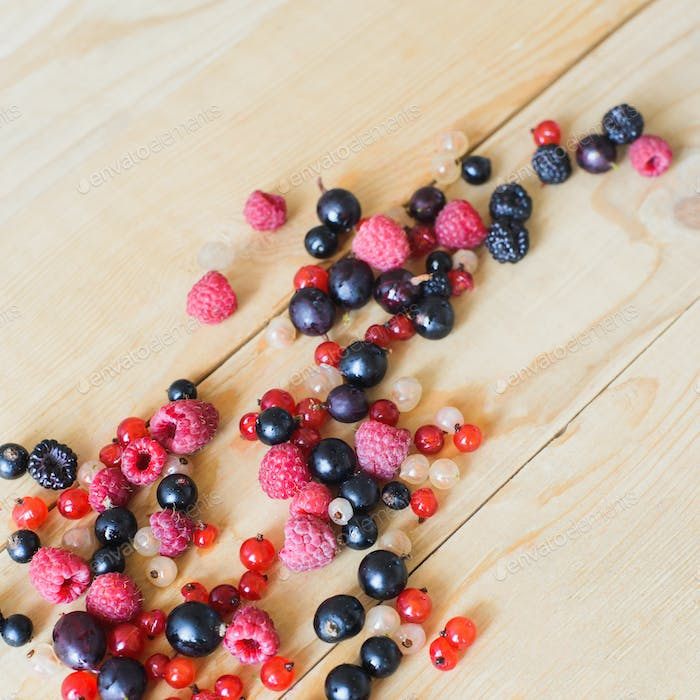 Wild forest berries