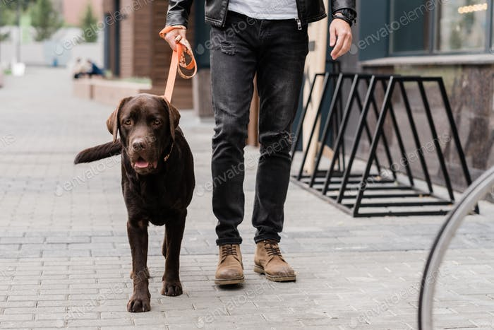 Cute brown purebred dog and his owner moving down street of the city