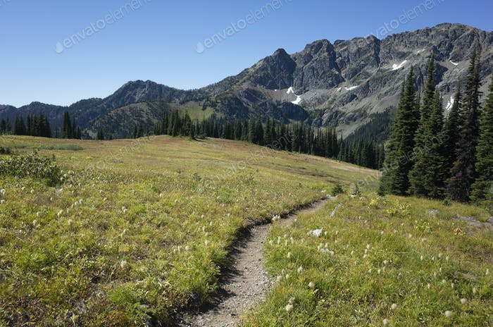 Alpine meadows of the Pacific Crest Trail