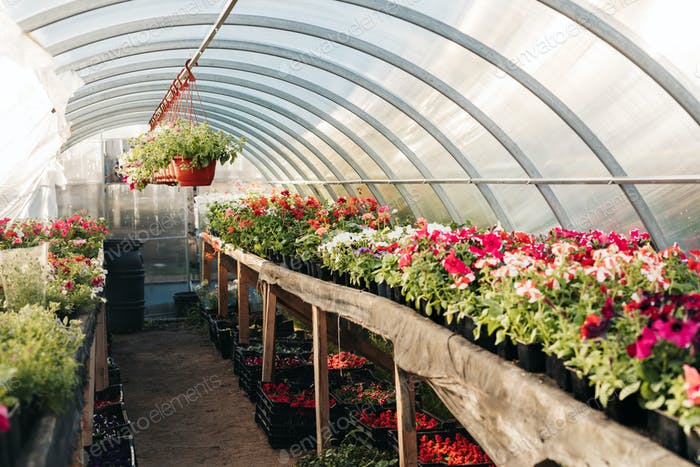 Large flower greenhouse, plant nursery with mixed potted flowers and hanging planters