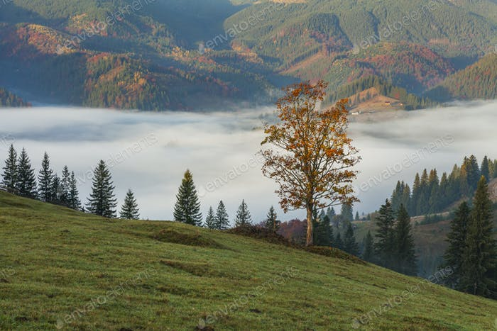 Amazing thick fog in the Carpathian Mountains. Ukraine