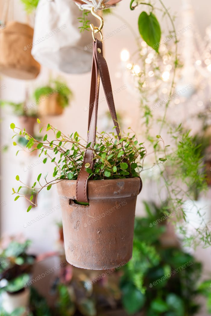 Pot with plant in a floral shop