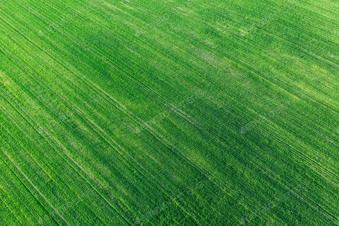 Aerial View Green Spring Field Landscape With Trails Lines. Flat