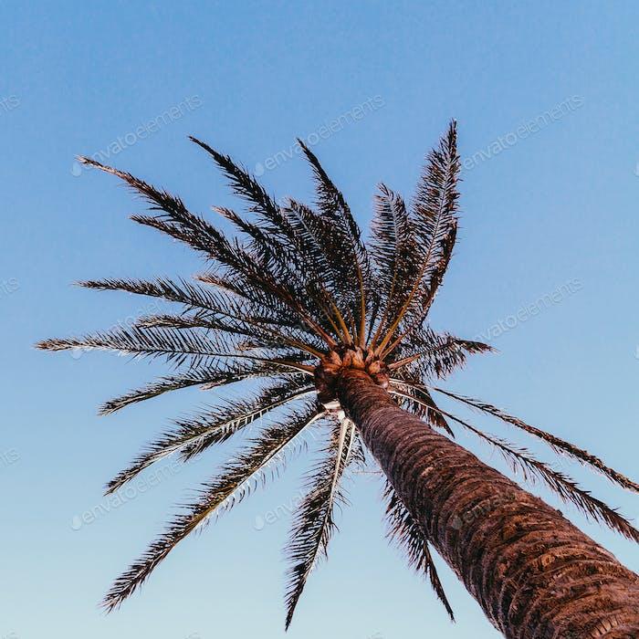 Minimal art. Tropical mood. Palm tree