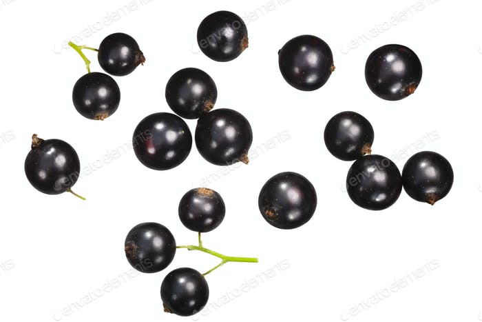 Blackcurrant ribes nigrum, top ,paths