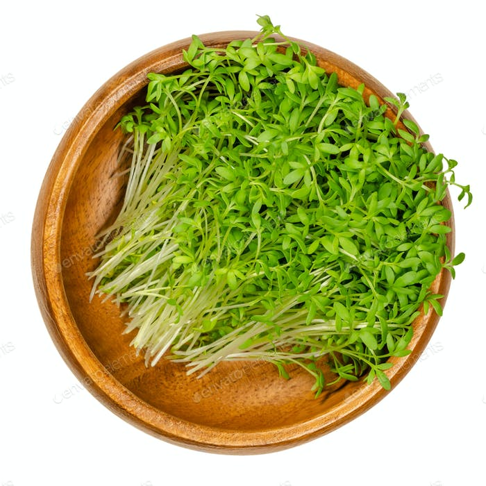 Garden cress sprouts, pepperwort or peppergrass in a wooden bowl