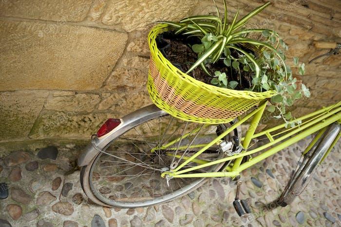 Plants and bike