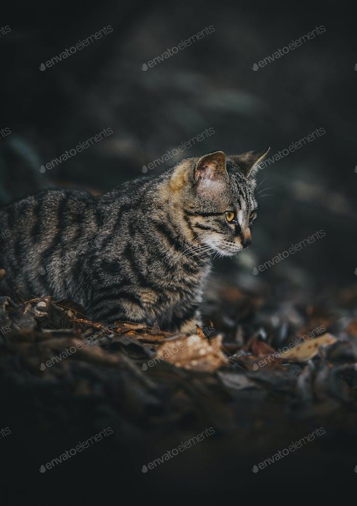 Wild cat in China