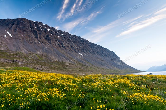 mountain and meadow of yellow flowers