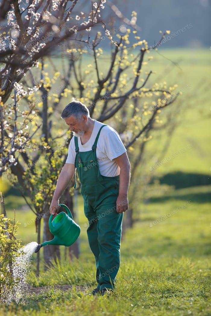 Bewässerung Obstgarten/Garten - Porträt eines Seniorenmenschen Gartenarbeit in