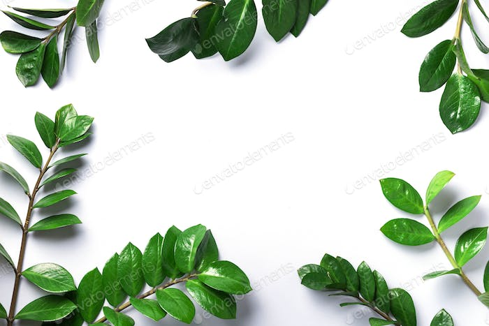 Green leaves of Zamioculcas zamiifolia on white background. Top view. Copy space. Texture of green