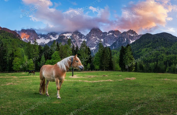 Horse under the mountain enjoying on the meadow