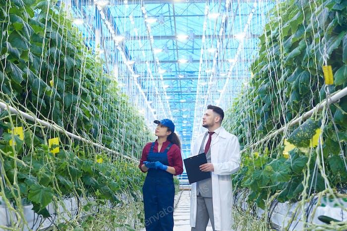 Scientist Examining Vegetables in Plantation