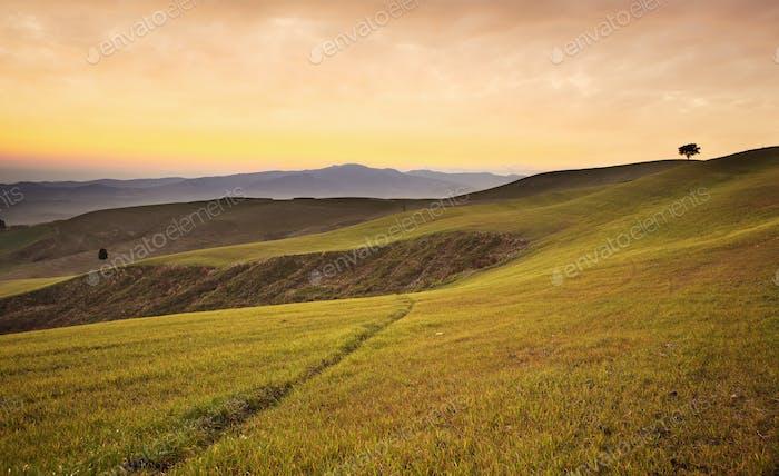 Farmland near Volterra, rolling hills on sunset. Rural landscape