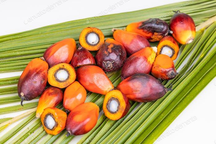 Gruppe von frisch geernteten Ölpalmfrüchten auf Palmblättern
