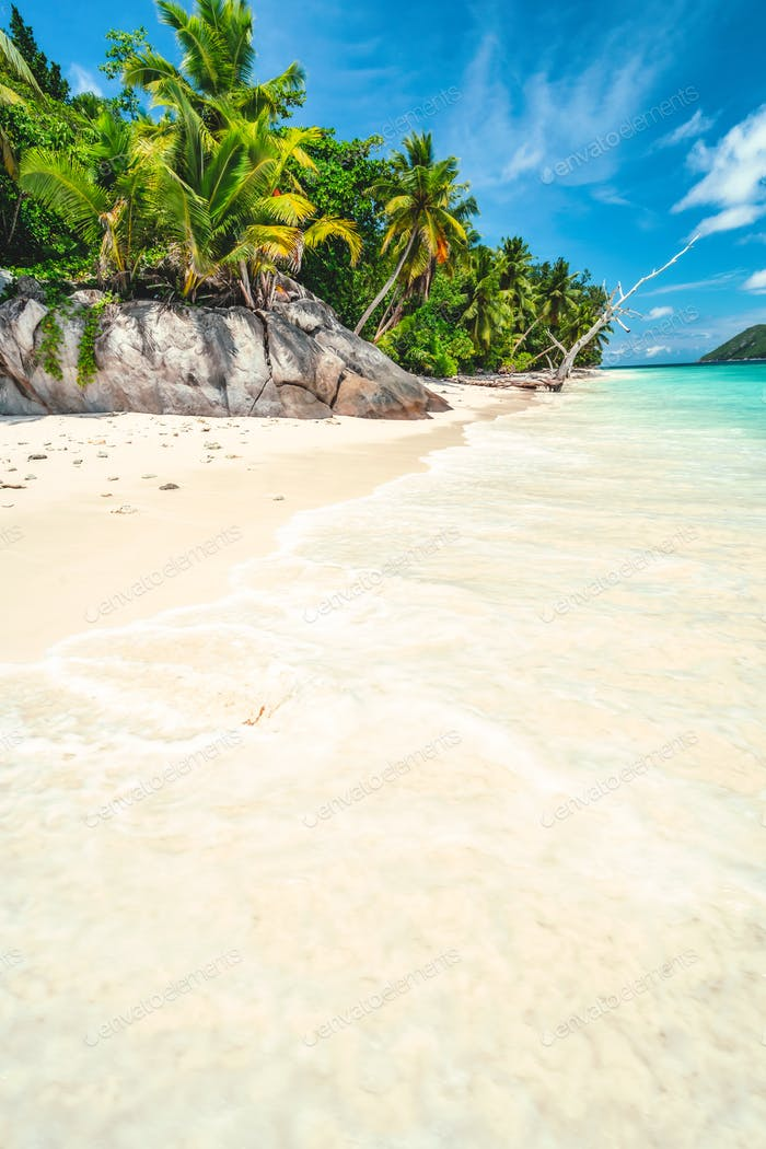Vacation holiday bright day background wallpaper. Palm trees on tropical secluded sandy beach. Blue