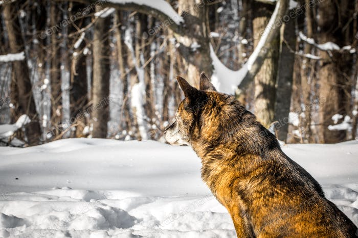 dog in a snowy forest