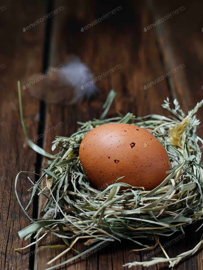 Chicken egg in straw nest