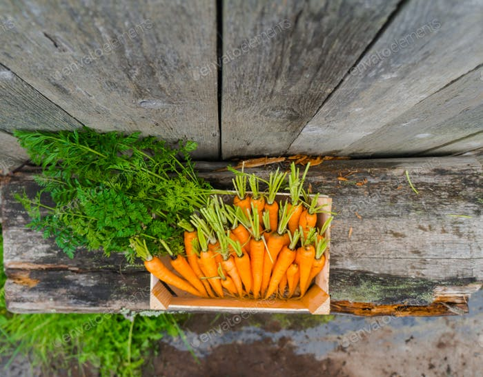 carrot in wooden box