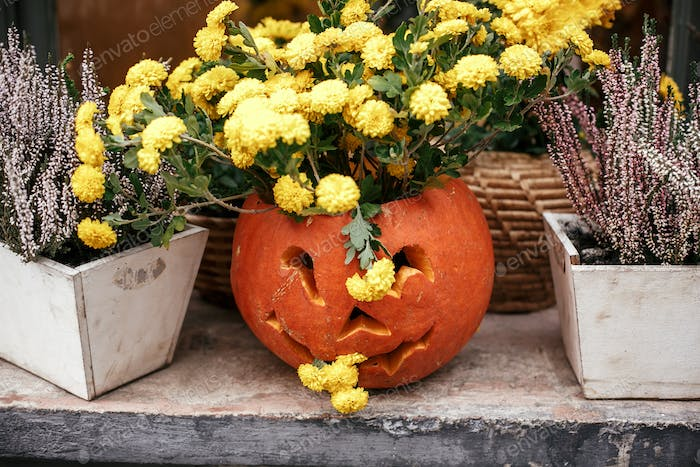 Halloween street decor. Jack o lantern pumpkins and flowers in city street, holiday decor