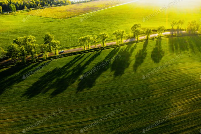 A bird's-eye view of a green field and a road in Europe.Nature Of Belarus.Own green field at