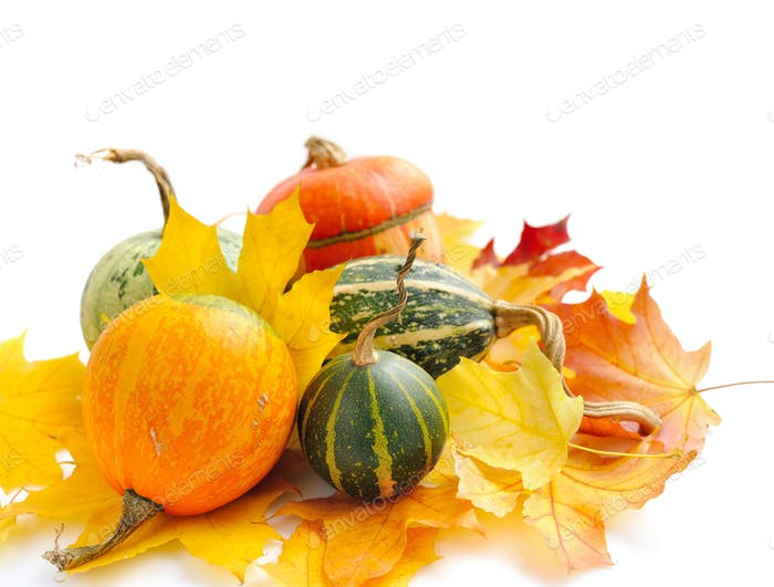 Decorative pumpkins and autumn leaves on a white background