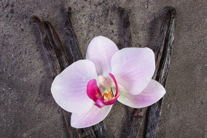 Blüte Orchidee und duftende Vanille-Sticks