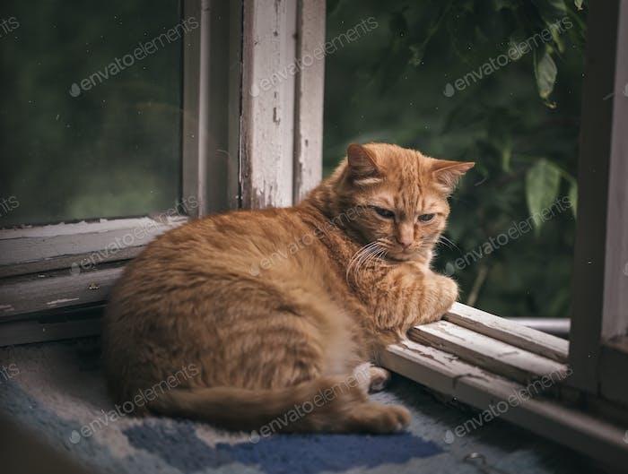 Ingwer Katze entspannt auf einem Balkon